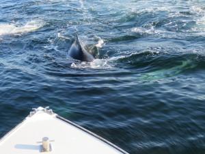 whalesIMG_1082 (002a)